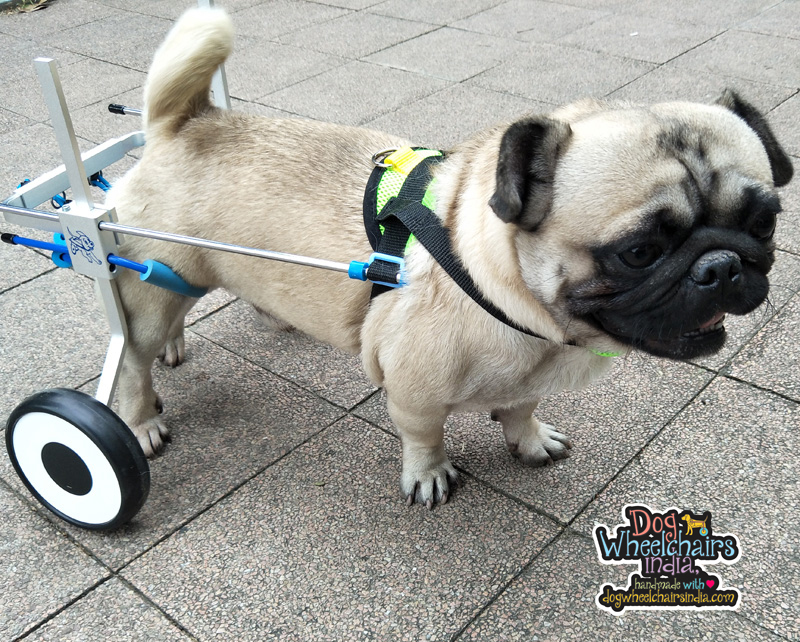 Mintbowl dog wheelchairs India Customer photos
