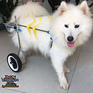 Mintbowl Dog Wheelchairs India Handicap Pet Cart Light Weight